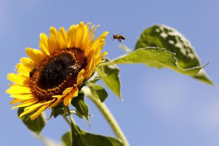 البشر قد يواجهون سوء تغذية إذا اختفت الطيور والنحل