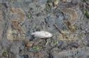 توزر_إشكالية تتهدّد سمك نادر30-11-2015_1