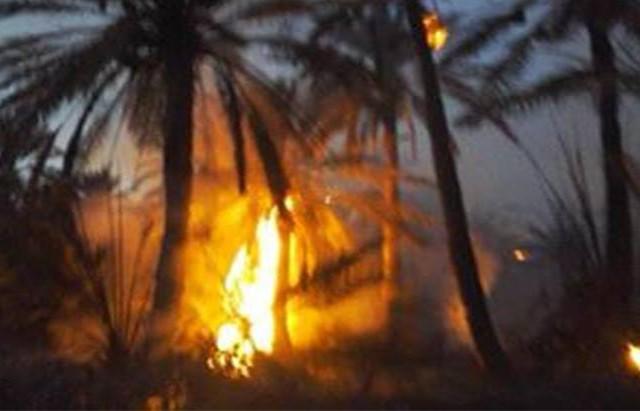 السيطرة على حريق إندلع بالواحة القديمة بحامة الجريد بتوزر11-01-2017_1