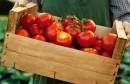 طماطم معدة للتحويل